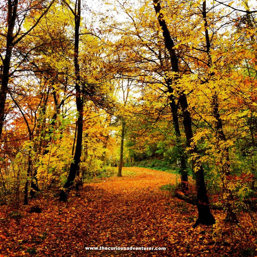 www.thecuriousadventurer.com