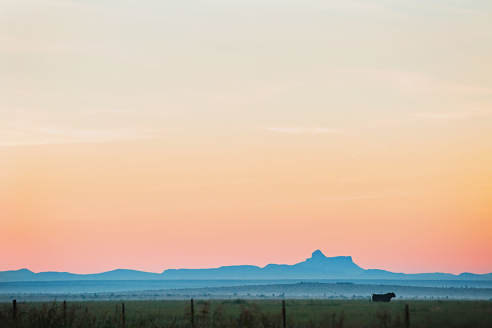 mls14-marfa-cow-1.jpg