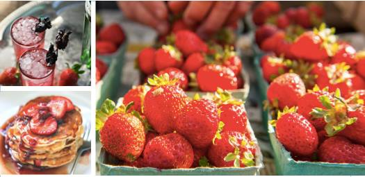 come taste the strawberries of Saanich!