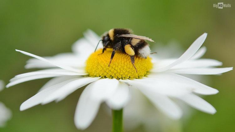 pollinators island.jpg