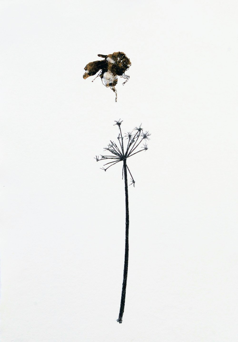 Cow Parsley & Bee II