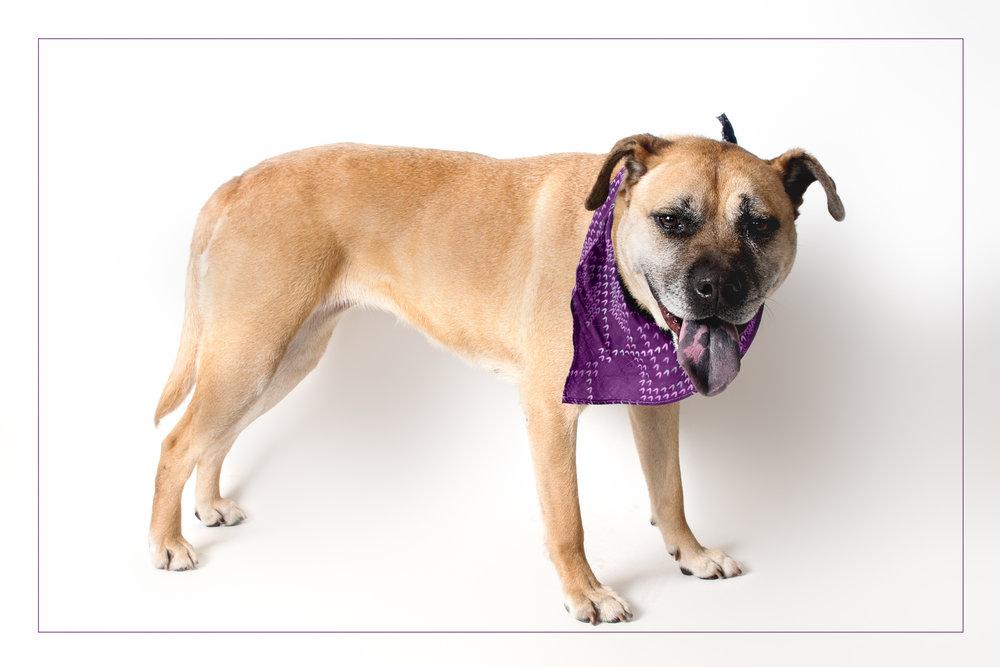 shelter dogs (1 of 15).jpg