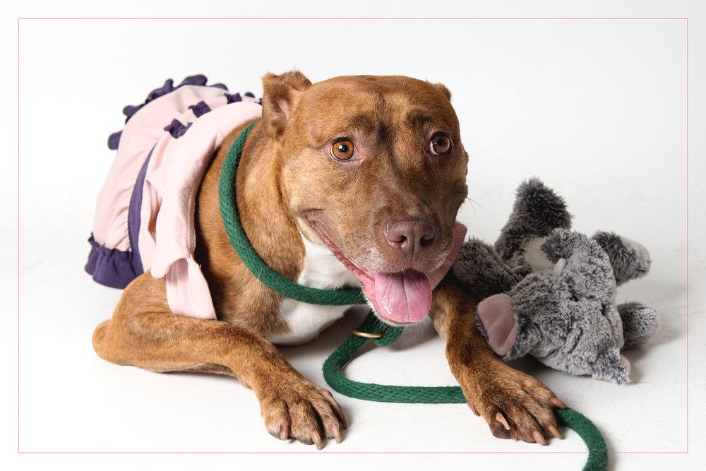 shelter dogs (8 of 15).jpg