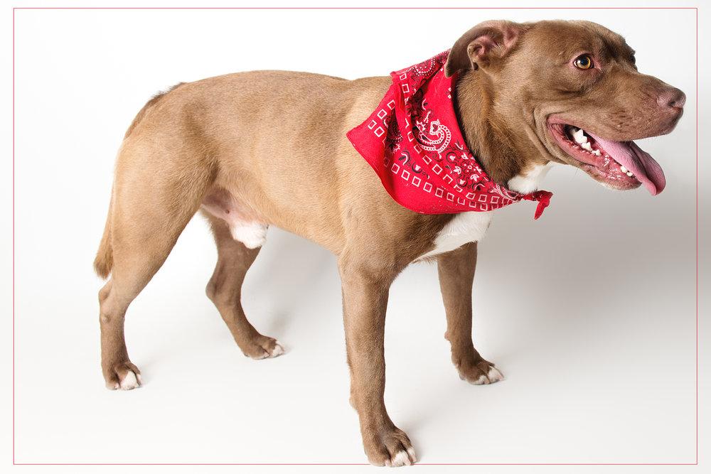 shelter dogs (12 of 15).jpg