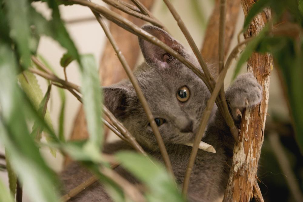 Fayette Animal Shelter Cats-1.jpg