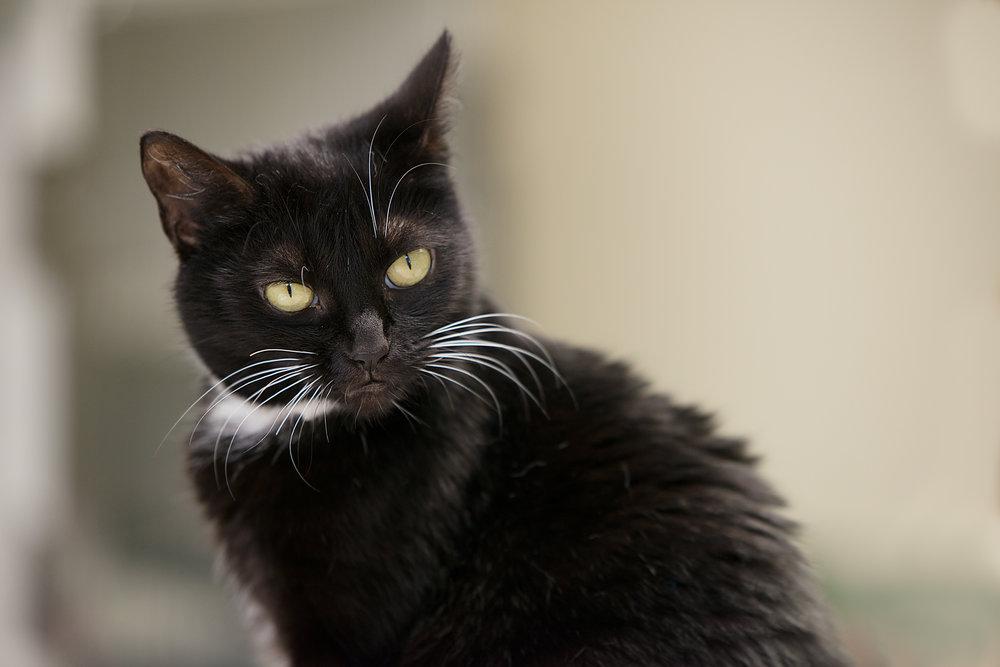 Fayette Animal Shelter Cats-3.jpg