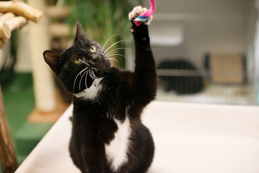 Fayette Animal Shelter Cats-4.jpg