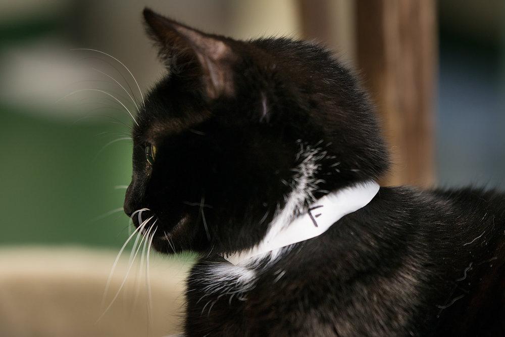 Fayette Animal Shelter Cats-5.jpg