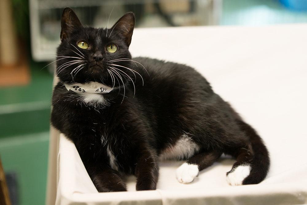 Fayette Animal Shelter Cats-6.jpg