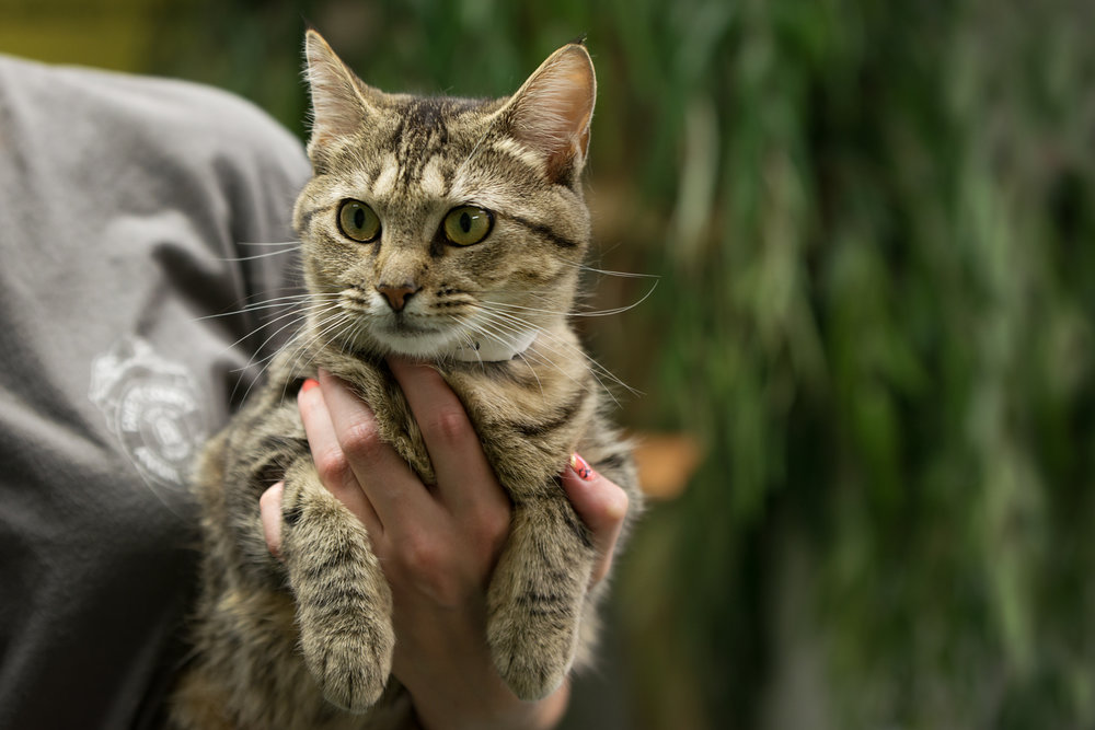 Fayette Animal Shelter Cats-7.jpg