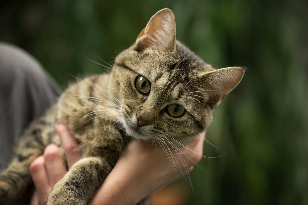 Fayette Animal Shelter Cats-9.jpg