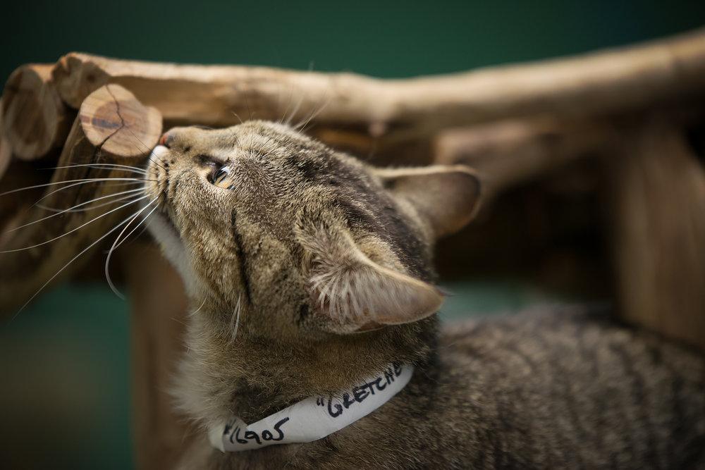 Fayette Animal Shelter Cats-8.jpg