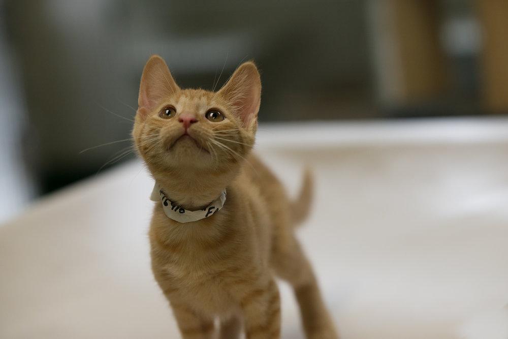 Fayette Animal Shelter Cats-12.jpg