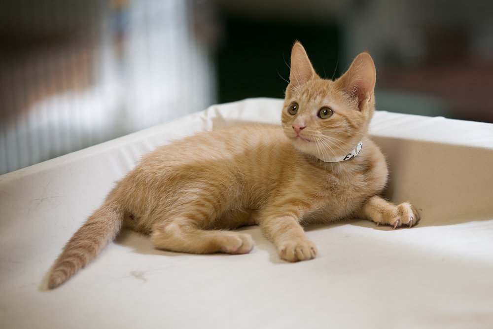Fayette Animal Shelter Cats-13.jpg
