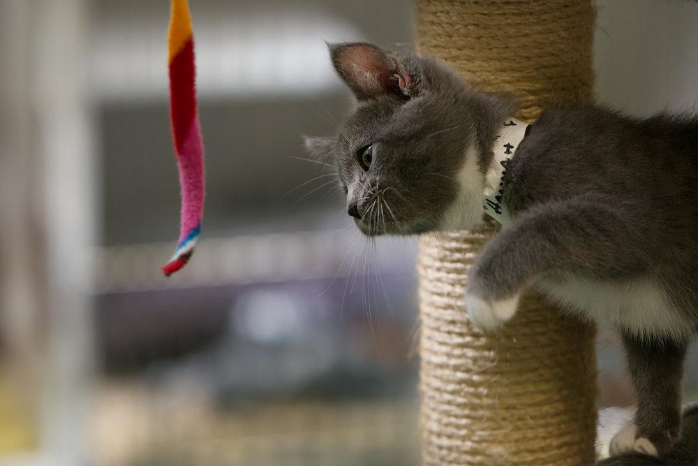 Fayette Animal Shelter Cats-15.jpg