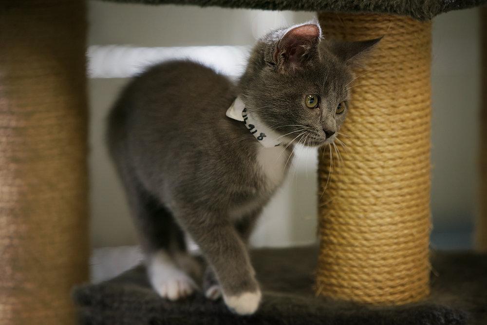 Fayette Animal Shelter Cats-16.jpg