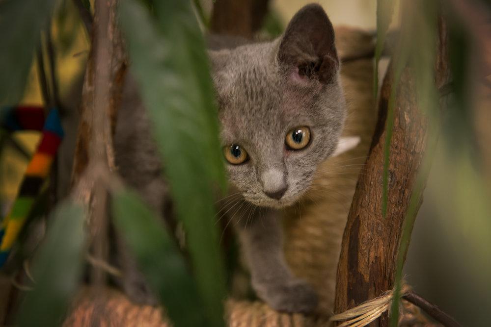 Fayette Animal Shelter Cats-18.jpg