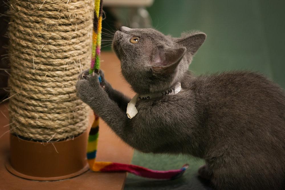 Fayette Animal Shelter Cats-17.jpg