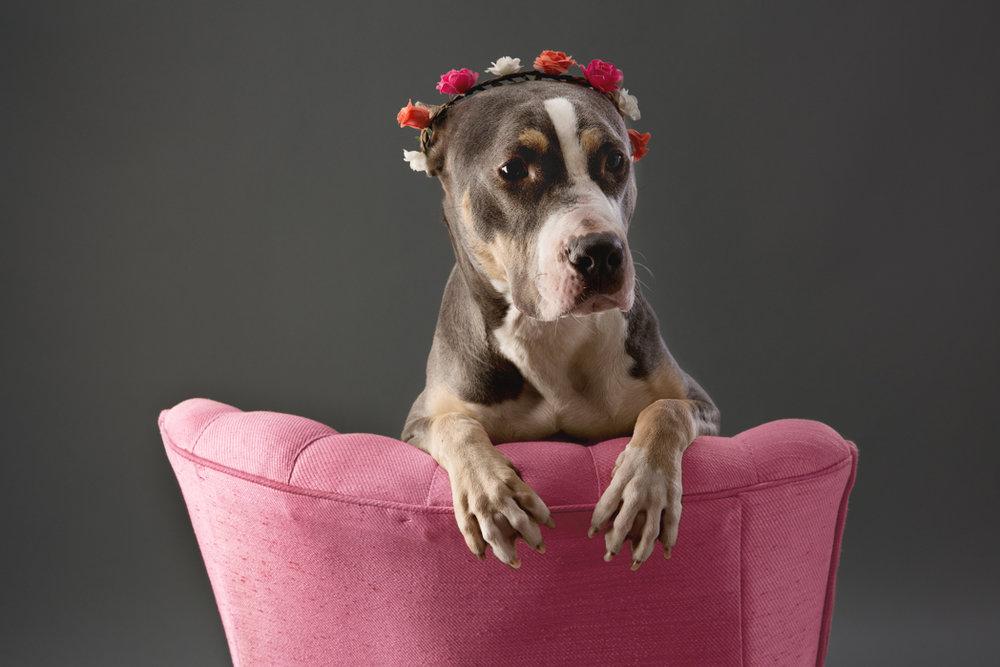 shelter dog-4.jpg