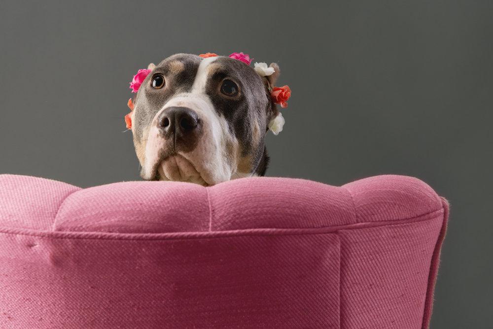 shelter dog-5.jpg