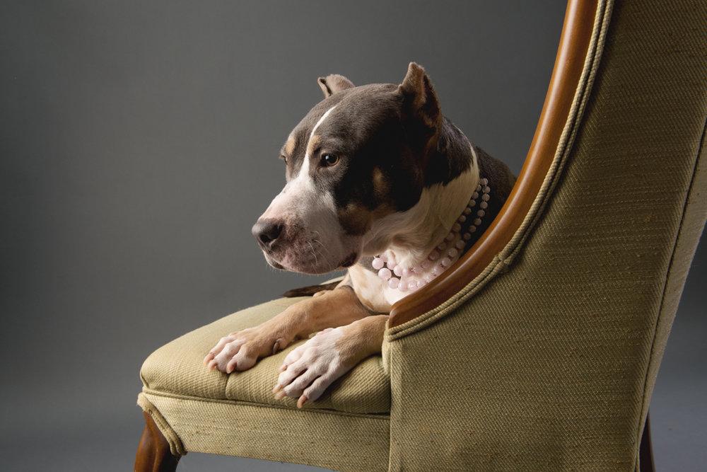 shelter dog-7.jpg