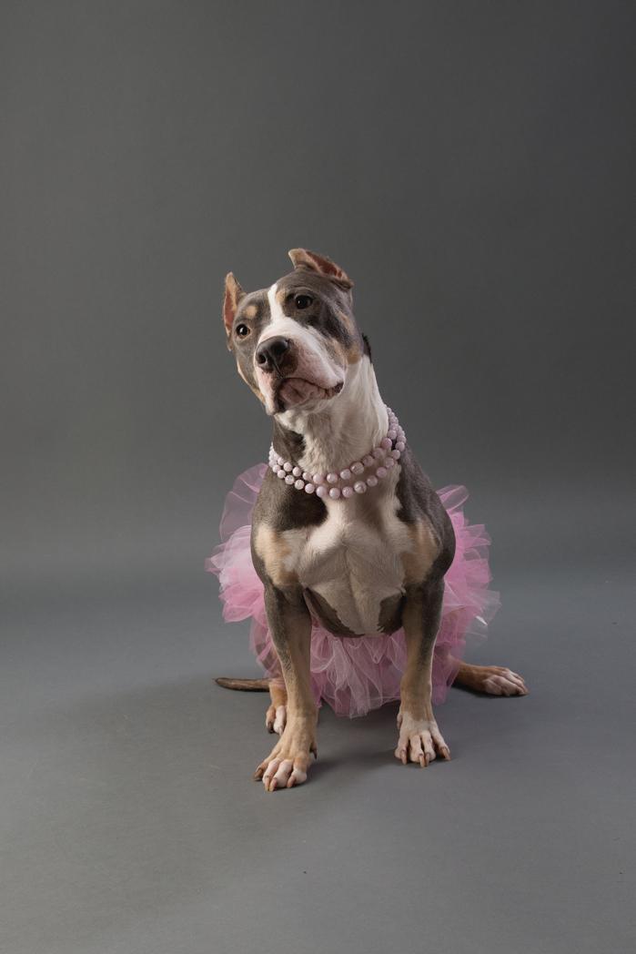 shelter dog-9.jpg