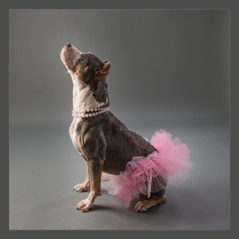 shelter dog-11.jpg
