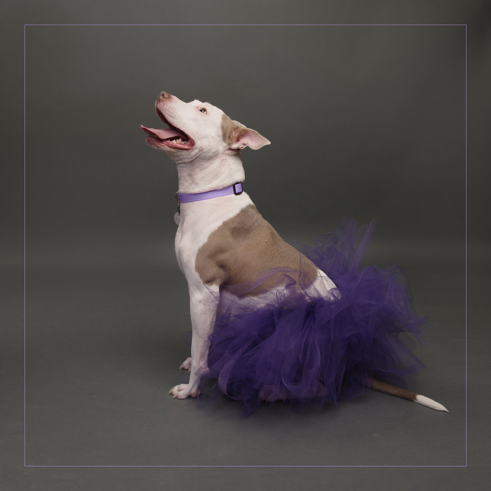 family pet photographer-4.jpg