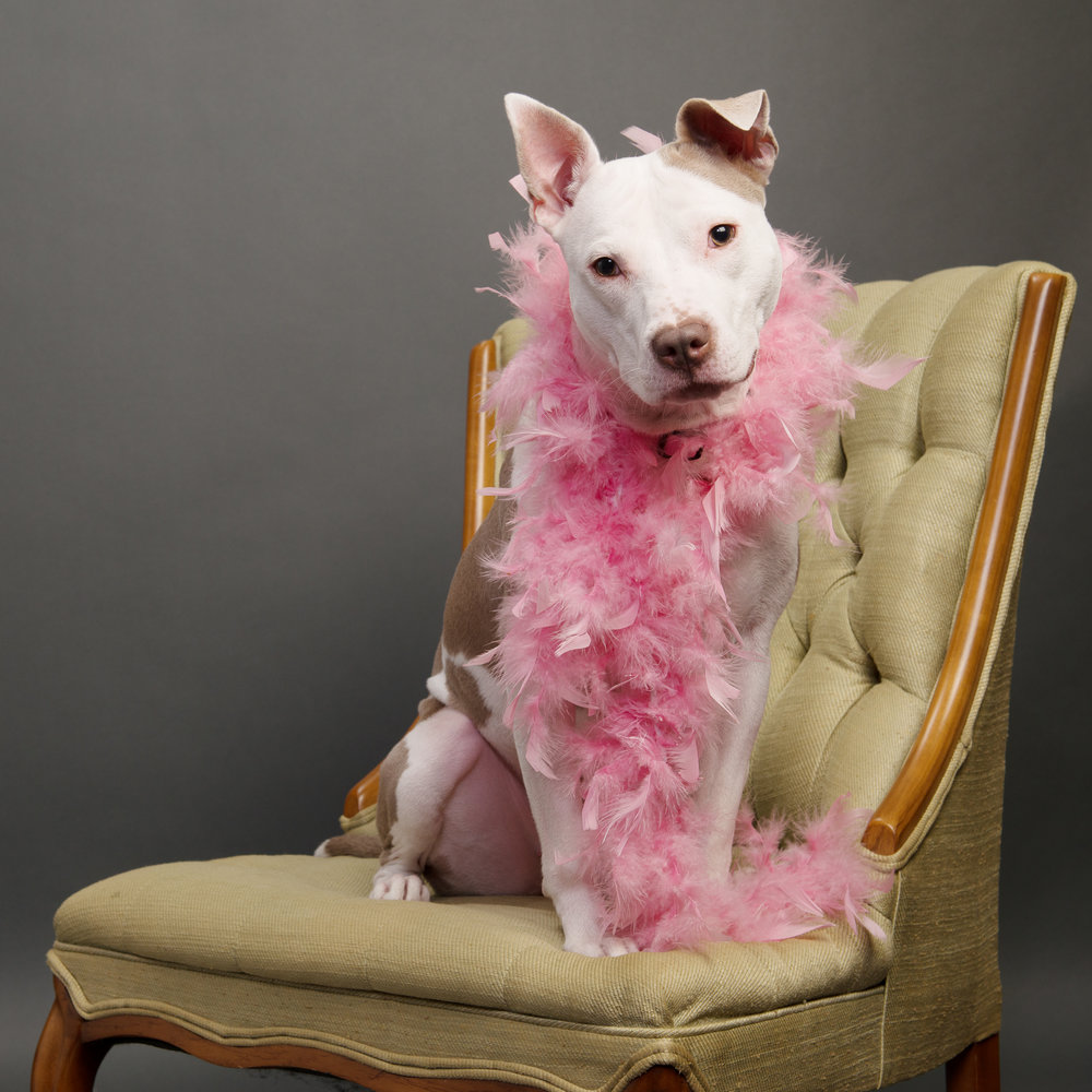 family pet photographer-3.jpg