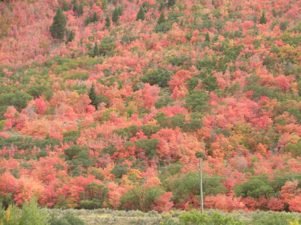 Utah Fall Colors 2.JPG