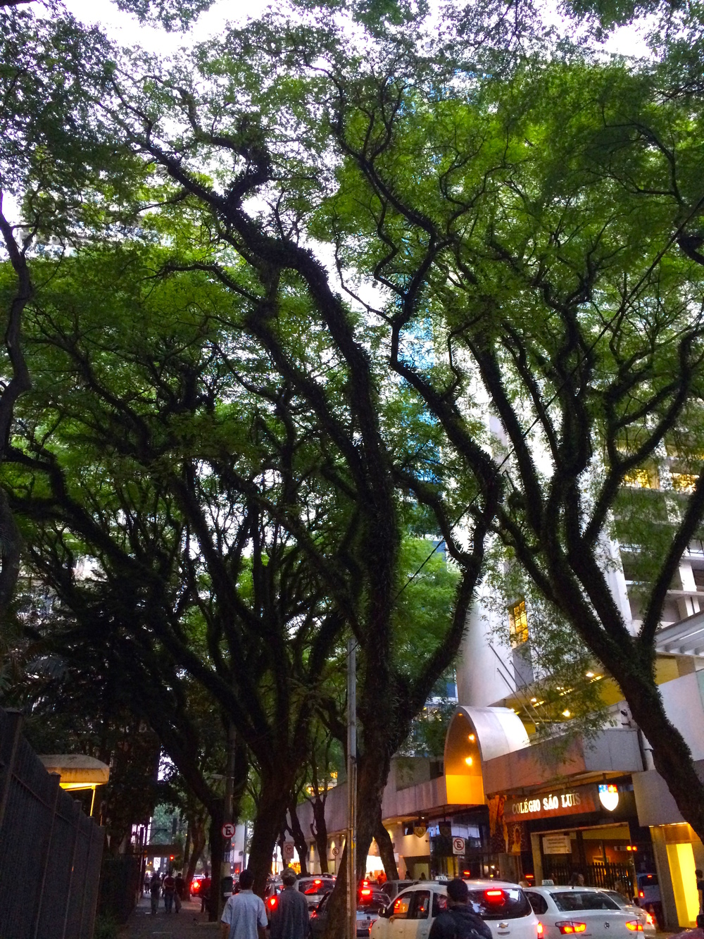 Trees in Sao Paulo