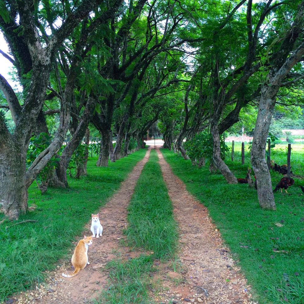Road in Brazil