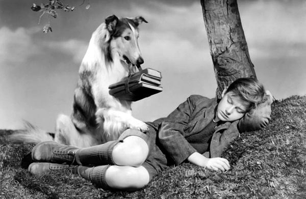 'Lassie get help!'