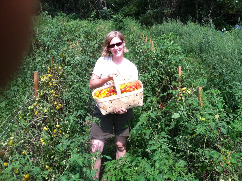 Jen harvesting tasty cherry tomatoes!
