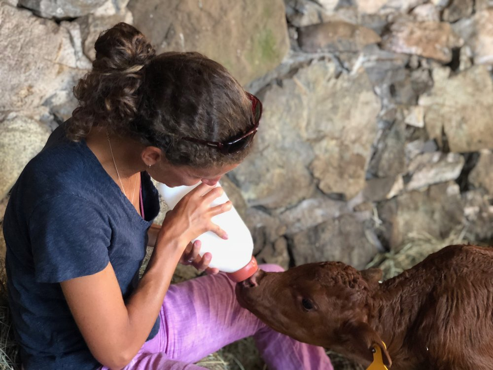 Mustache was fortunate to have DJ Mitchell coordinate bottle feedings twice a day for four months. It takes time to be a mama cow!