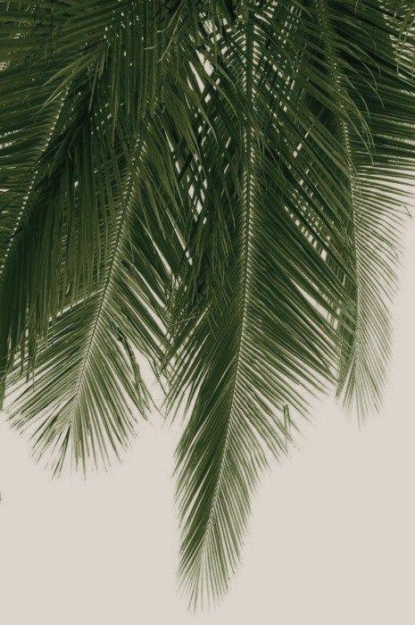 Palmleaf
