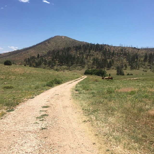 I just love when my car leaves the pavement and we drive down this pathway to our Tiny House.  #tinyhouse #colorado #vacation #mountains #horses #dirtroad #gravel #path #peaceandquiet #airbnb