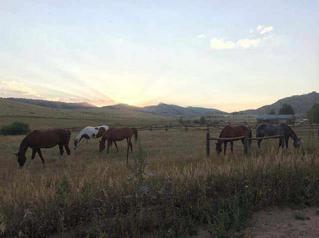 Love our neighborhood! . . . . #nofilter #thow #tinyhouse #horses #sunset #mountains #clouds