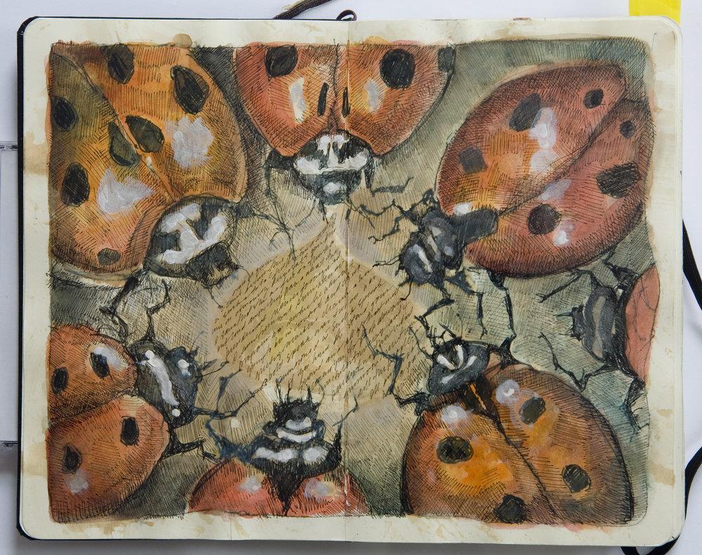 Ladybug Story