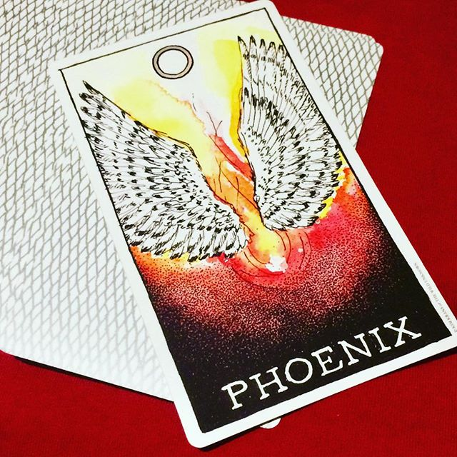 I keep pulling the phoenix card in my daily card selection... time to start paying attention! #wildunknown #wildunknownanimalspirit #animalspiritdeck #kimkrans #phoenix #dailycard #rebirth #tuningin #intuition