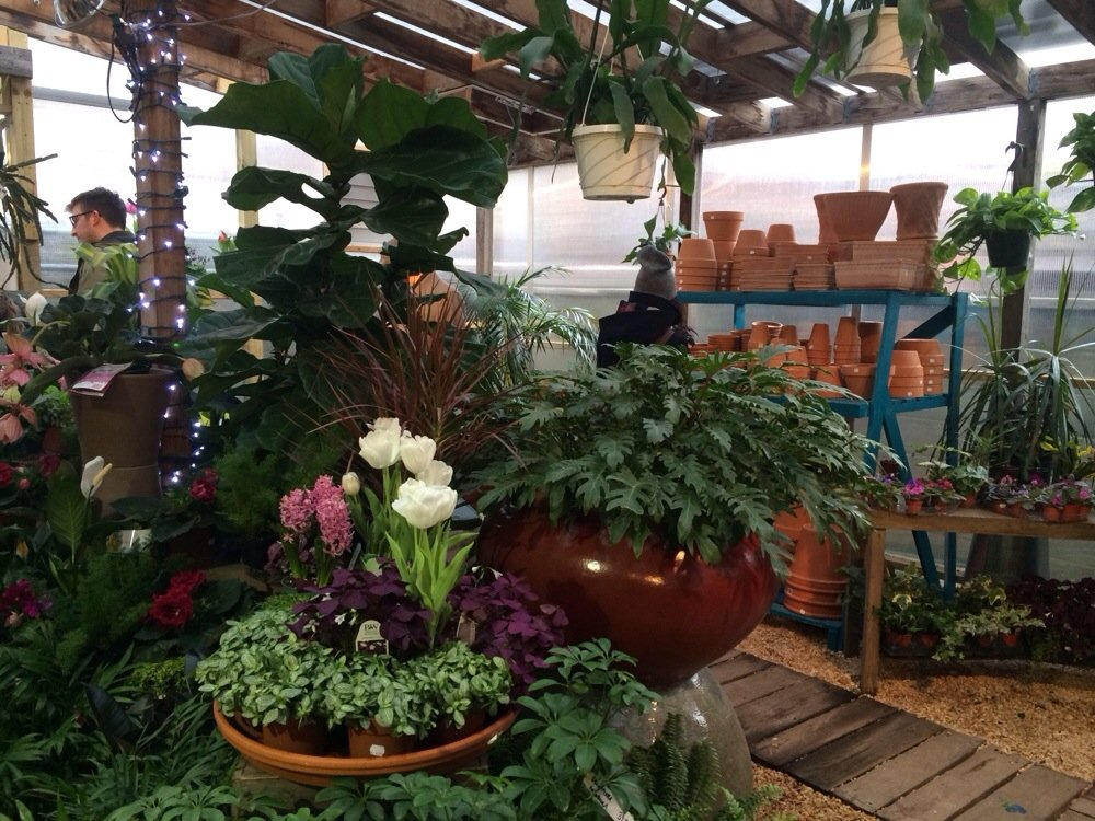 garden center plants.jpg