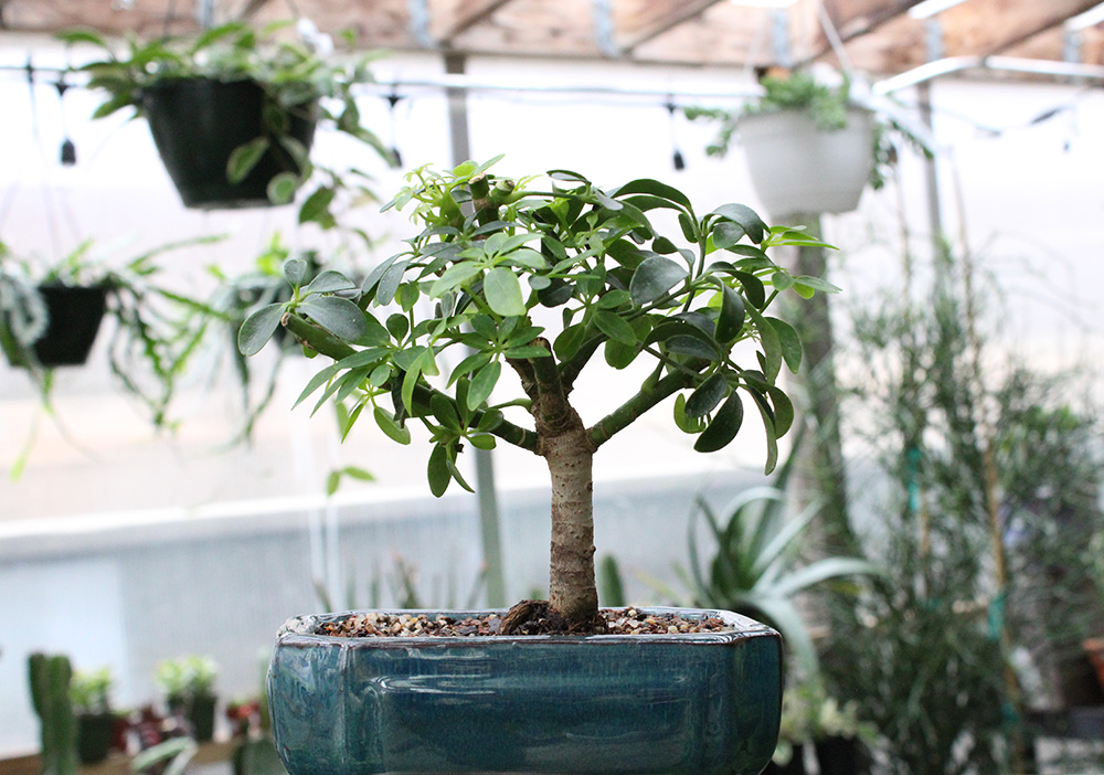 BONSAI TREE 3.jpg
