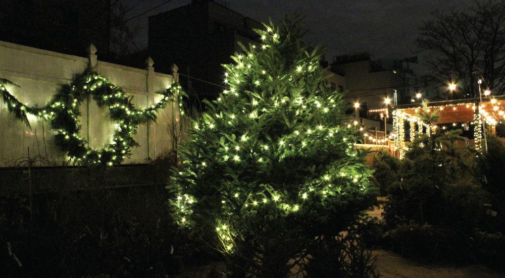 Crest TREE 4.jpg