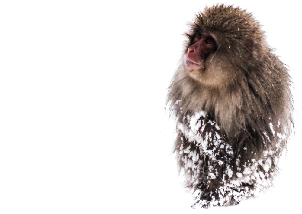 monkey in the snow.jpg