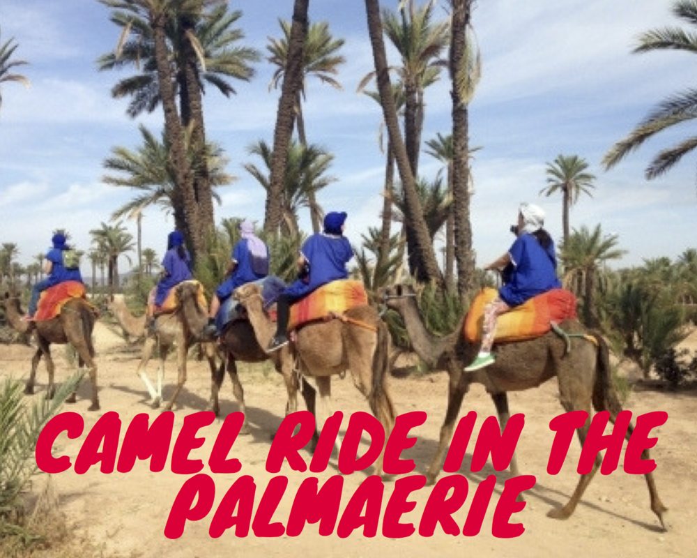 CAMEL RIDE IN THE MARRAKECH PALMAERIE