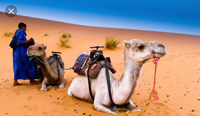 HAVE YOU ALREADY BOOKED YOUR MARRAKECH ACCOMMODATION? Pick some trips, activities and adventures to punctuate your travels in Morocco