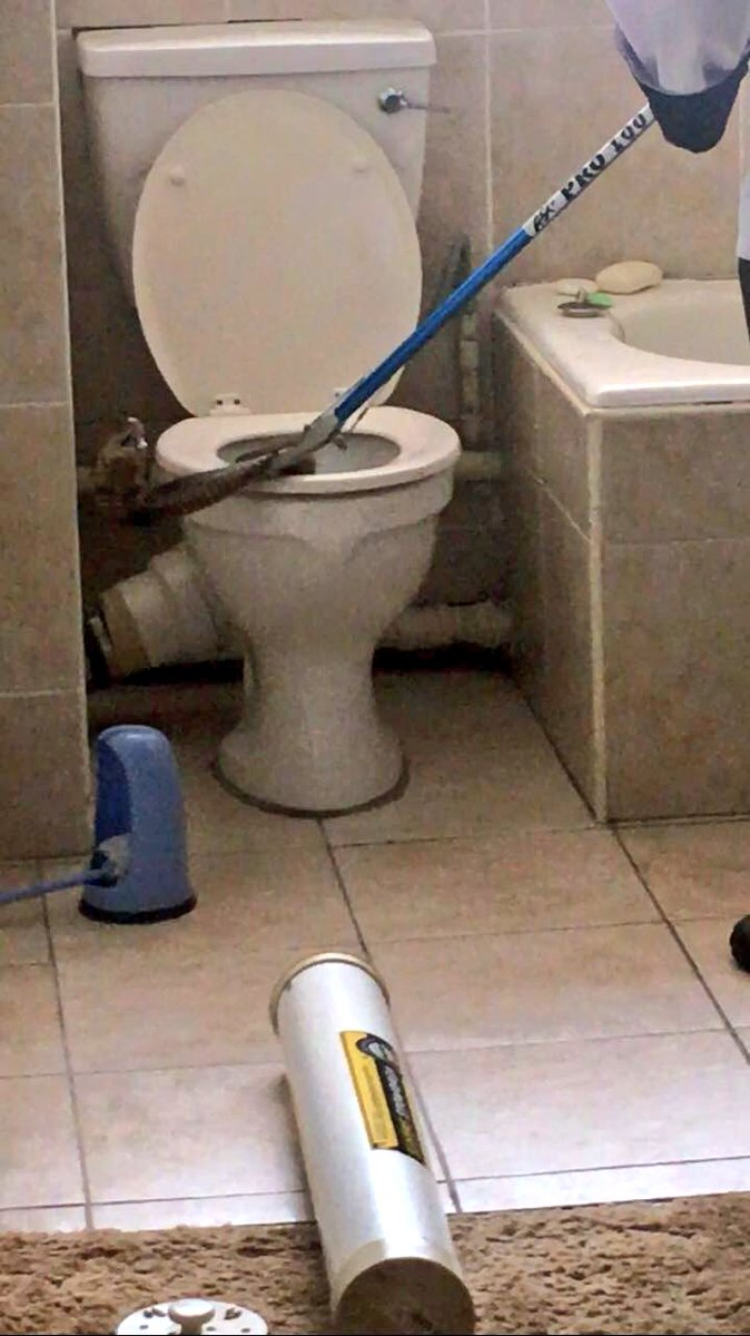 Snouted Cobra Sneaks Through Sewer Into Commode — The Singular ...