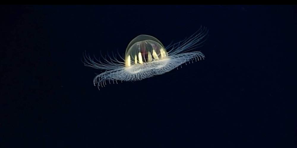 Image credit: NOAA's Okeanos Explorer (Public Domain)