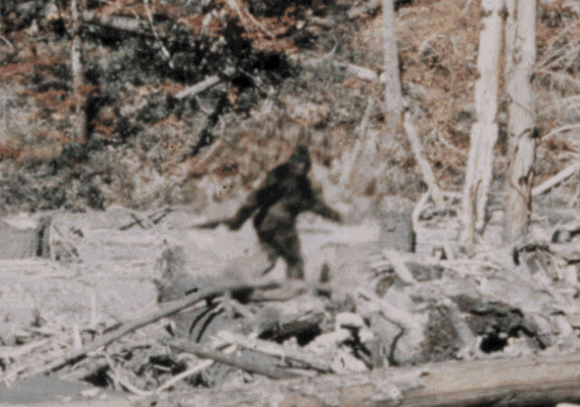 A still from the famous Patterson-Gimlin film that purportedly shows an actual Bigfoot.