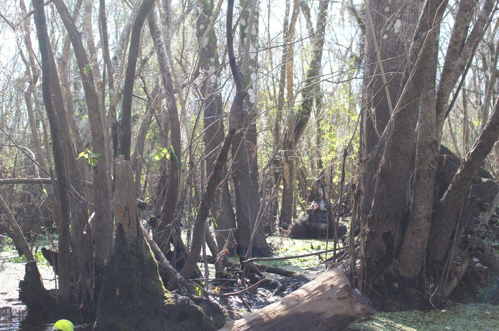 The 2015 hillsborough river skunk ape hoax the singular for Hillsborough river fishing